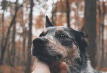 cani-riconoscono-i-bugiardi