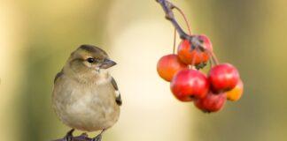 uccelli problemi respiratori