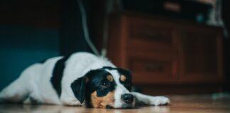 cane-disturba-vicinato