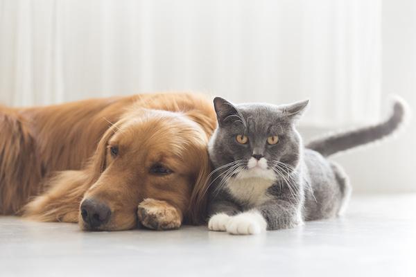 cani-e-gatti-anziani