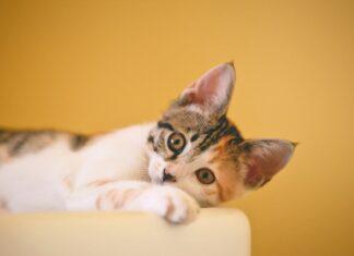 gatti a vita libera