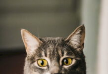 gatto-imitare-uomo