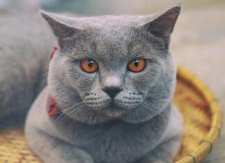 gatto stitico