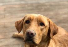 osteoartrite-nel-cane
