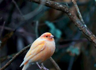 patologie-respiratorie-negli-uccelli