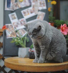 gatto-in-condominio