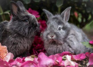 regalare un coniglio a natale