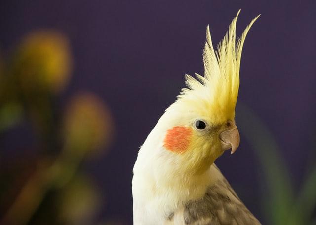 uccello fa rumore