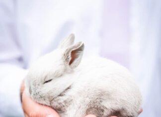vaccinare-il-coniglio-da-compagnia