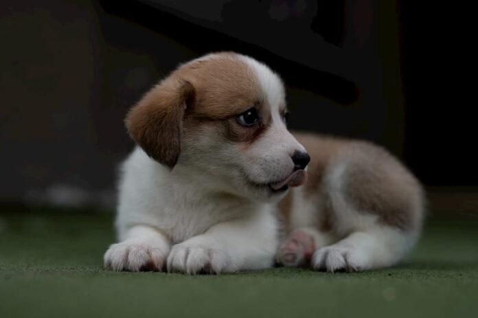 adottare-un-cane
