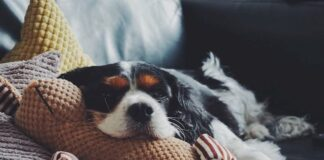 legame-cane-proprietario