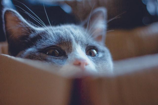 gatti carezze