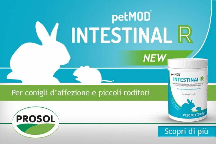 Petmod-Intestinal-R-New-PROSOL