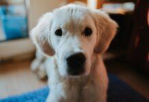 diarrea nei cuccioli di cane