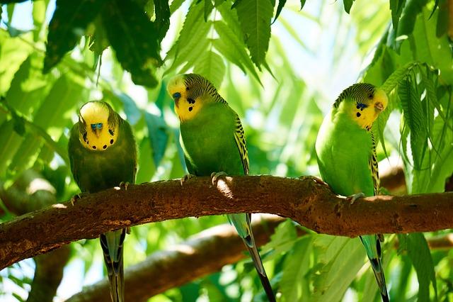 frutti di bosco per uccelli