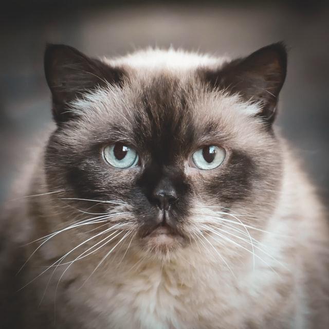 gatti famosi disney