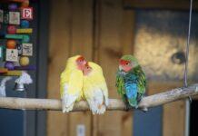 ginepro e uccelli