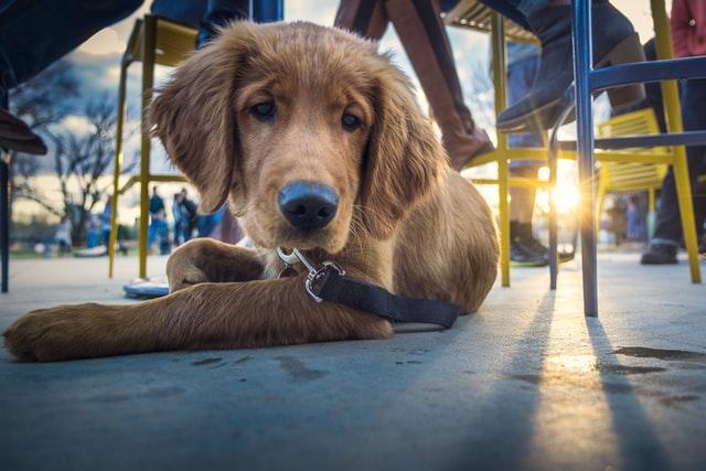cani-possono-entrare-nei-ristoranti