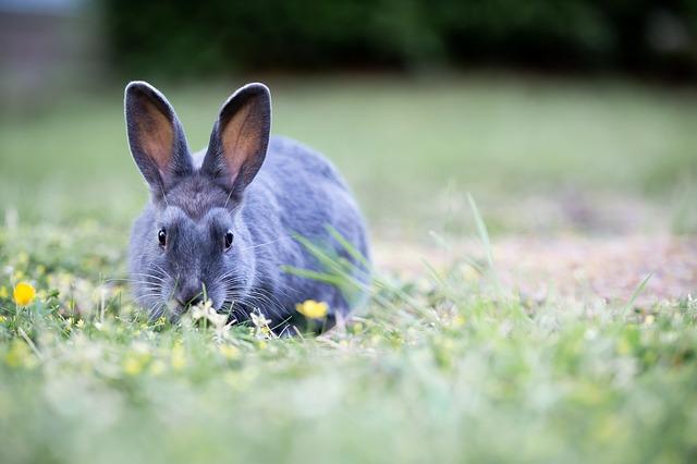 convivenza tra coniglio e furetto