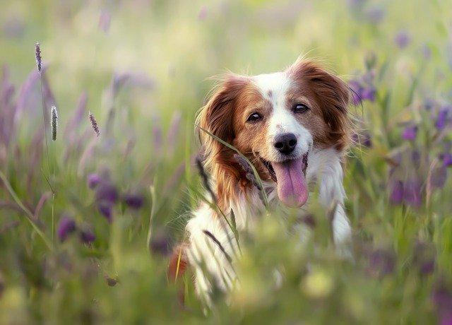 forasacchi pericolo cane