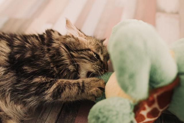 ludoterapia gatto