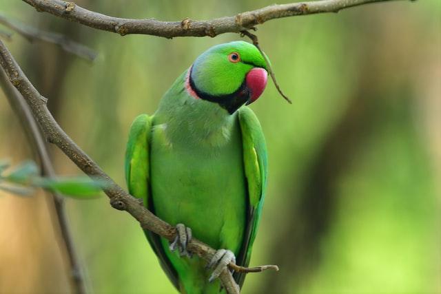 marmellata-di-sorbo-per-pappagalli