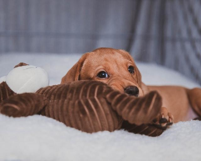 abituare cucciolo a stare in casa da solo
