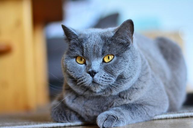 convivenza gatto furetto