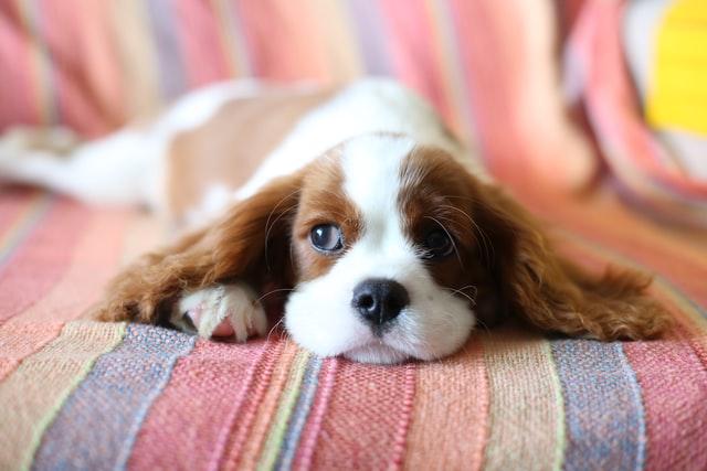 permesso retribuito per assistere il cane