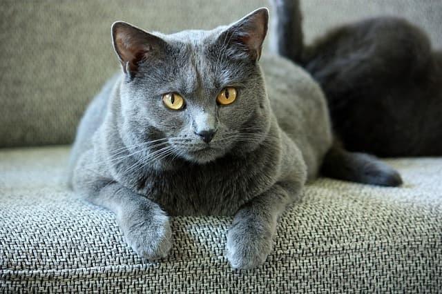antiparassitari-per-il-gatto