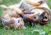 coccidi cane gatto