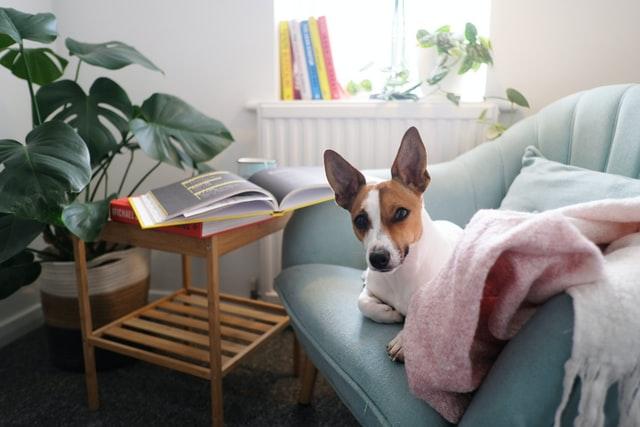 come riabituare il cane alla routine