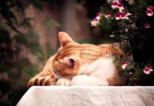 estate gatto