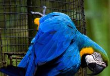 uccelli patologie cardiache