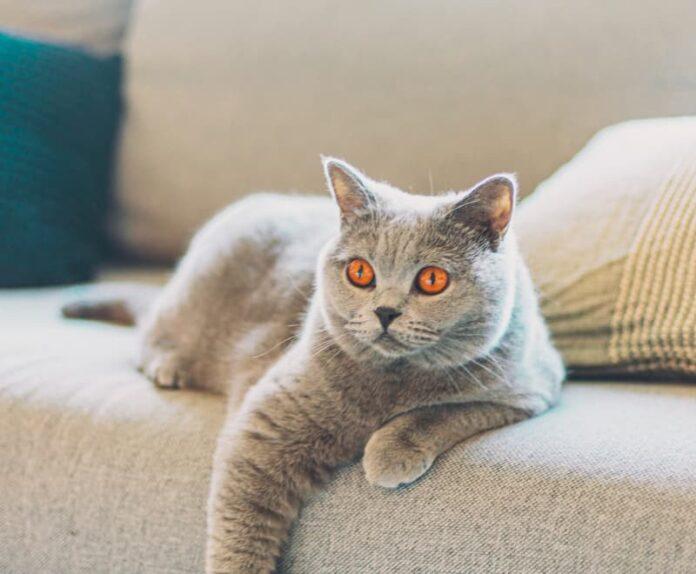 come-riabituare-il-gatto-alla-routine