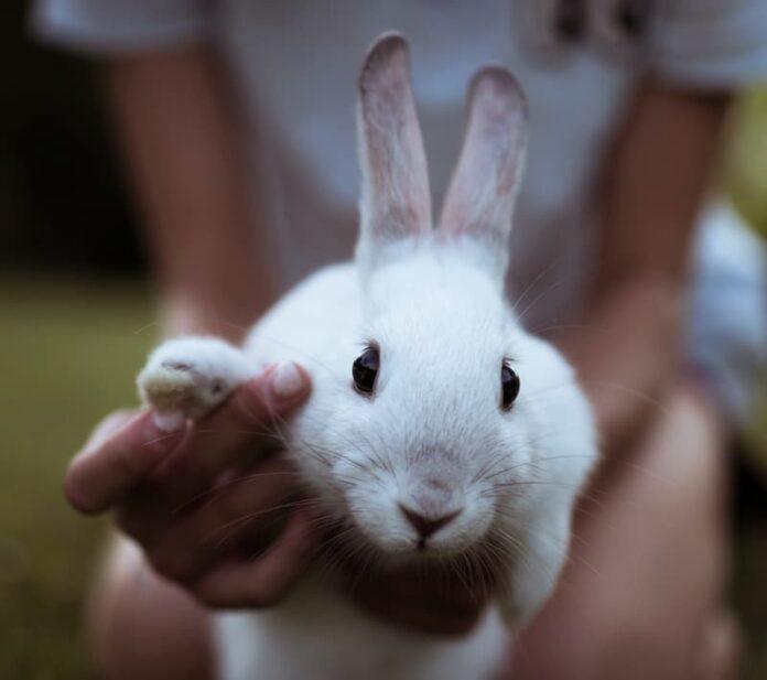 cose-da-sapere-prima-di-adottare-un-coniglio