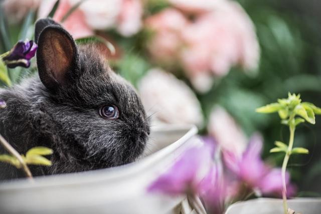 estate coniglio