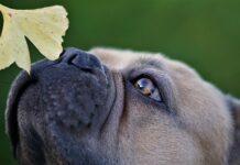 il-cane-percepisce-il-tempo