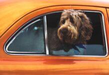 serie tv friends cani