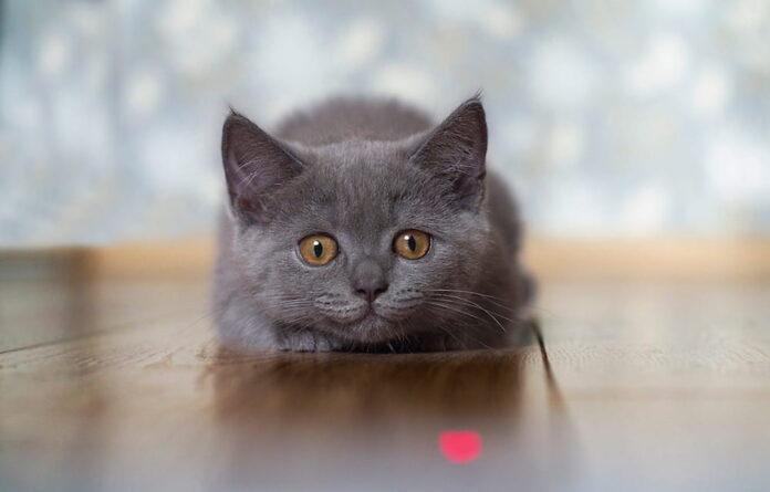 gioco puntatore laser gatto
