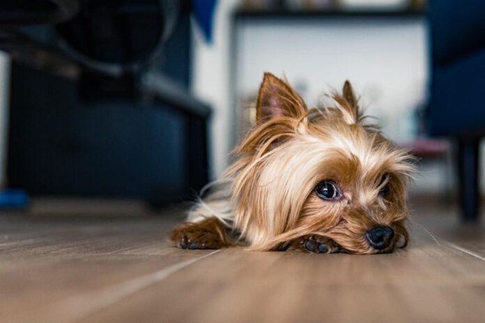 tumori ovarici nel cane