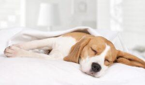 Anestesia nel cane e nel gatto cane