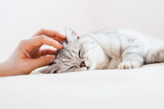 Anestesia nel cane e nel gatto gatto