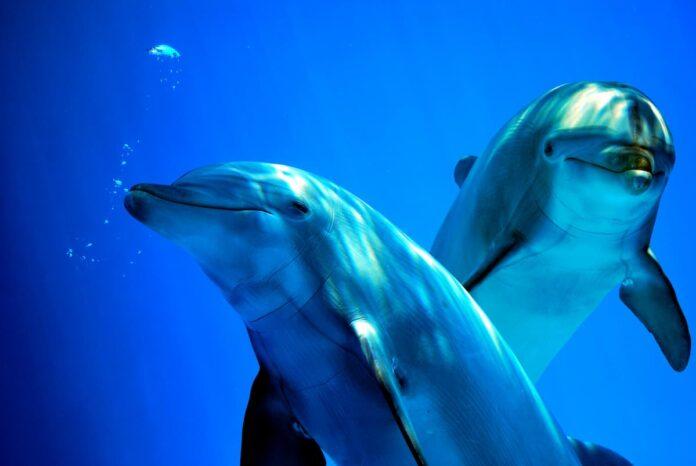 Inquinamento acustico dei mari delfino