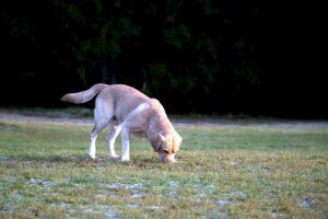 cane mangia le feci 3