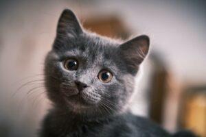 come il gatto vede l'uomo occhi Foto di Val Tievsky on Unsplash