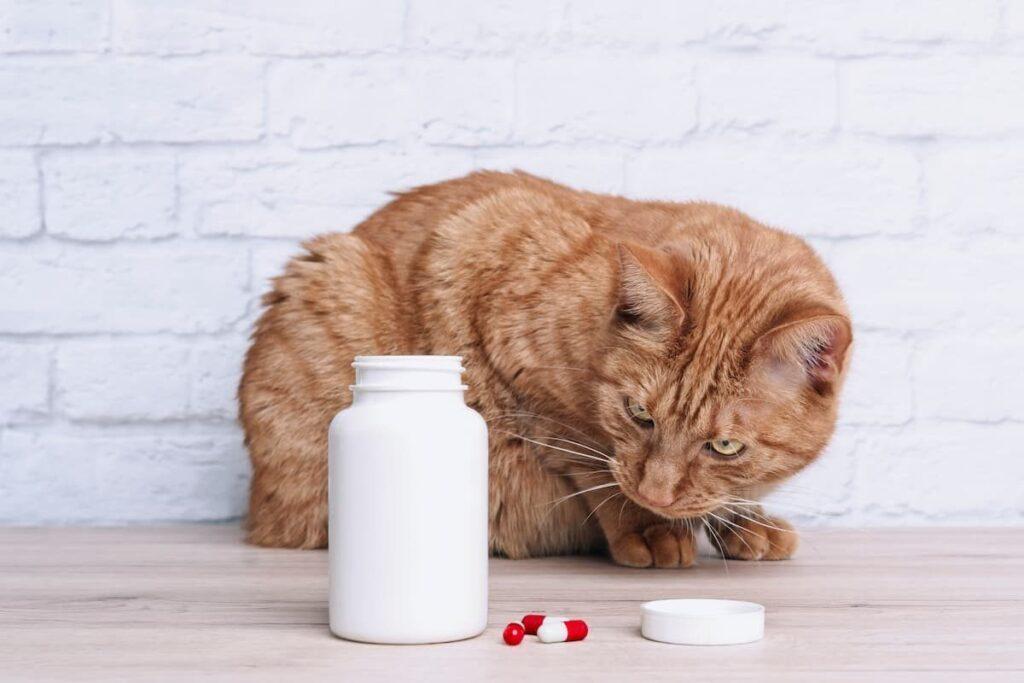 farmaci umani per animali gatto