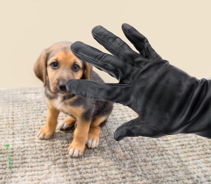 furti di animali cucciolo