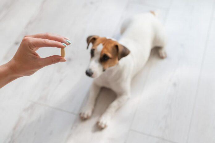 integratori alimentari per animali da compagnia Cane