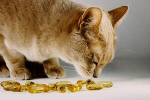 integratori alimentari per animali da compagnia gatto